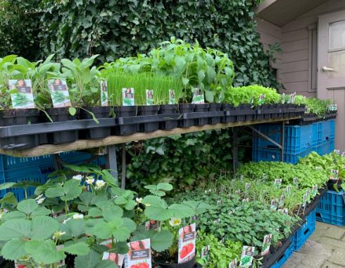 Groentehuisje plantjes tuin