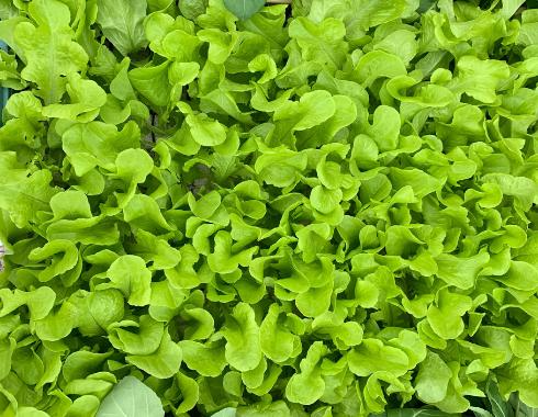Groentehuisje plantjes