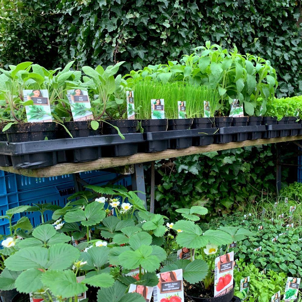 Groentenplantjes